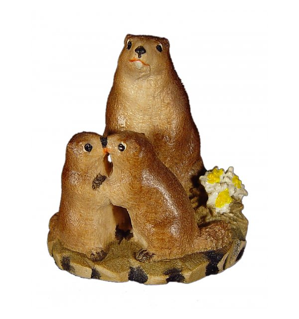 1381 - Marmot group in pine