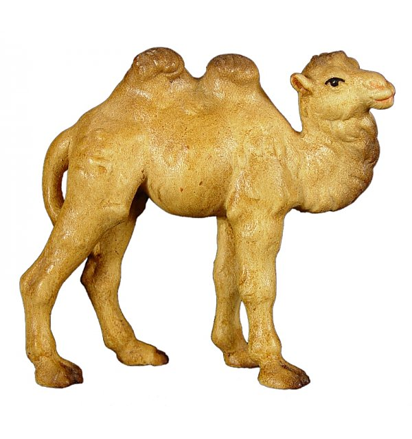 8027 - Camel baby